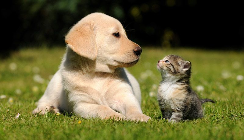 puppy and kitten lying in grass