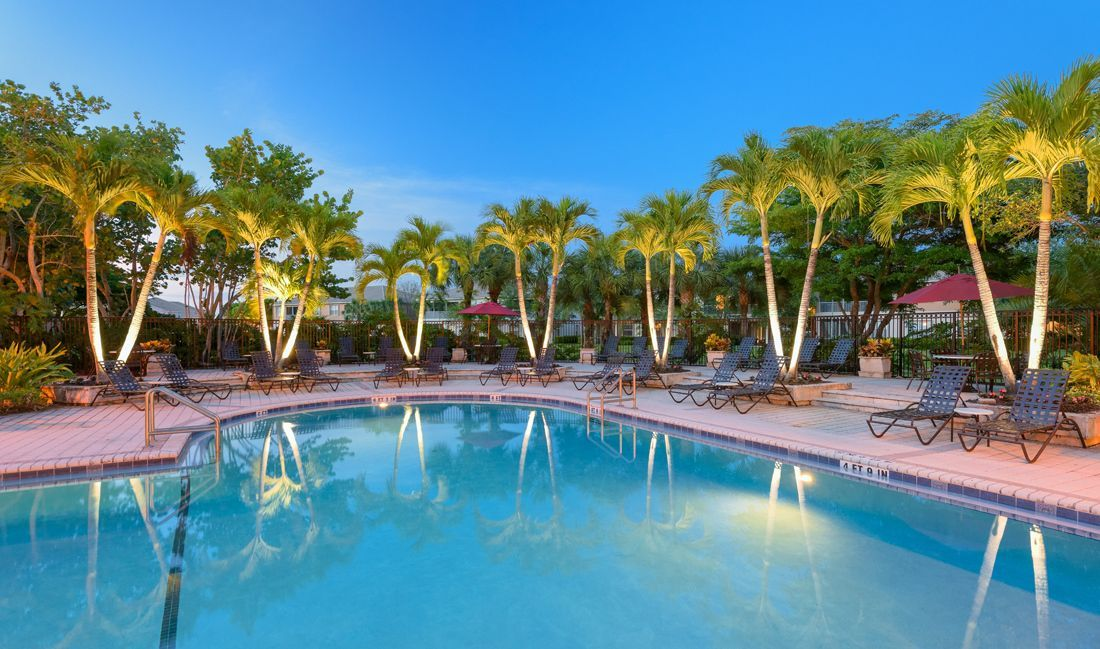 Swimming pool with seating surrounded by palm trees